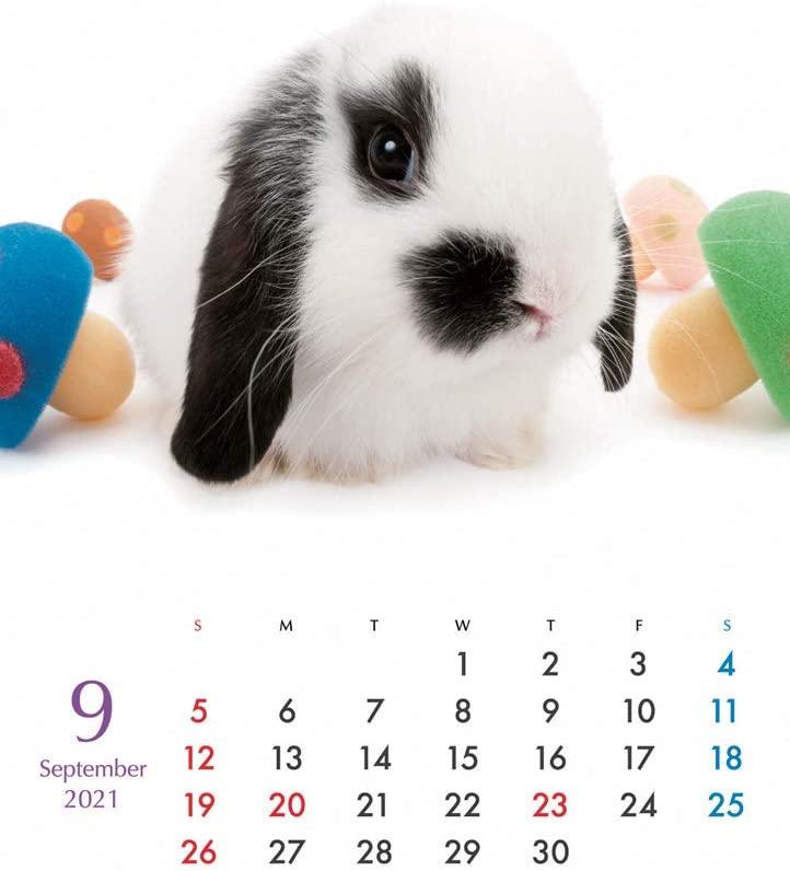 THE RABBIT卓上カレンダー 2021年