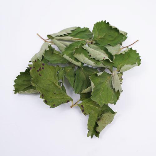 Natural Leaf いちごの葉