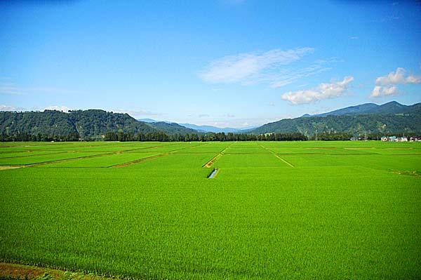 特別栽培米(減農薬・有機質肥料)魚沼産コシヒカリ5kg