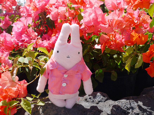 フモフモさん 一緒にハワイに行きたいな アロハシャツを着たすもも (ピンク・M) 可愛い癒しのぬいぐるみ シナダ製 GReeeeNのPVにも登場 (かわいい おもしろ ぬいぐるみ グッズ ★ 誕生日プレゼント 彼女 女性 女の子 女友達 プレゼント に最適)