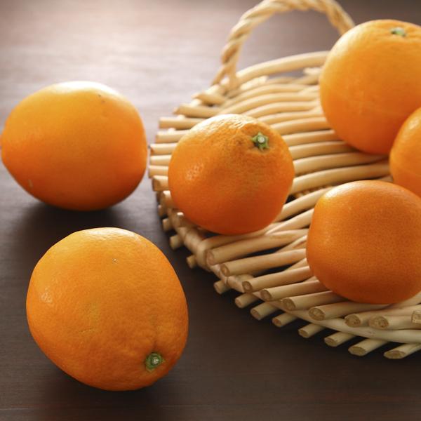 小南のブラッドオレンジ3kg(タロッコ)
