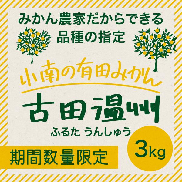 【12月下旬の収穫予定】小南の古田温州 3kg