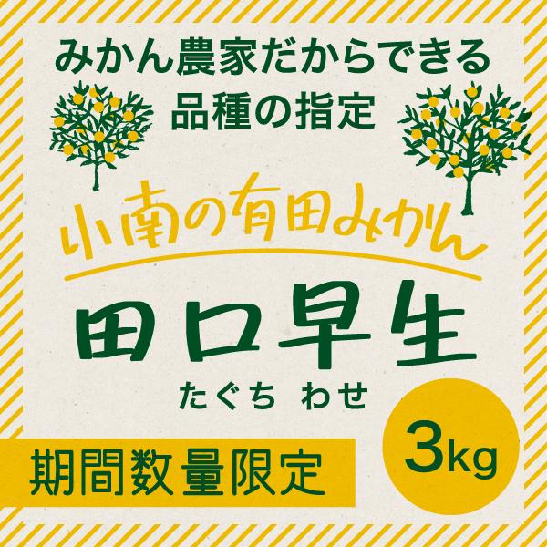 【11月中旬~12月上旬】小南の田口早生みかん 3kg