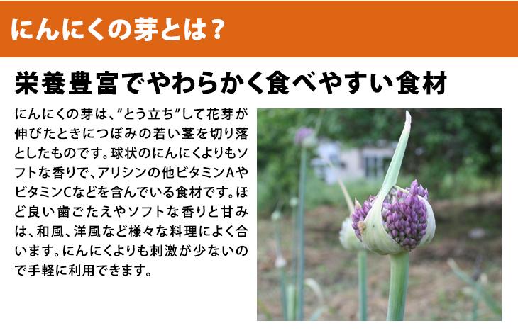 【送料無料】 乾燥にんにく 3kg SS〜Lサイズ混合 自家栽培 にんにく 国産  福岡