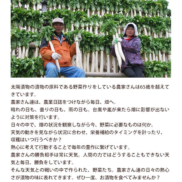 九州 発酵 高菜 750g 150g×5袋 セット 8セットまで1配送でお届 け [メール便]【3〜4営業日以内 に出荷】 送料無料