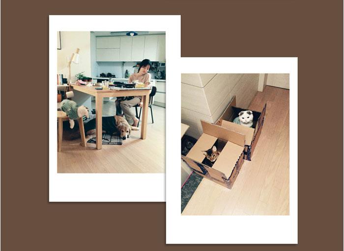 韓国語書籍 ク・ヘソンの写真エッセイ本「私は君のペット(伴侶動物)」
