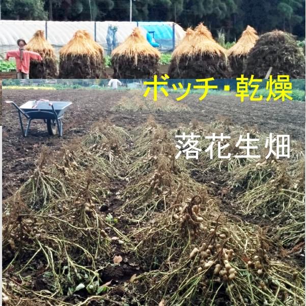千葉県産・半立種の殻付き高級落花生(ピーナッツ)400g