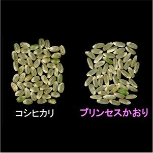 プリンセスかおり真空パック2合【カレー・炒飯・パエリアがプロも認める味になる香り米】