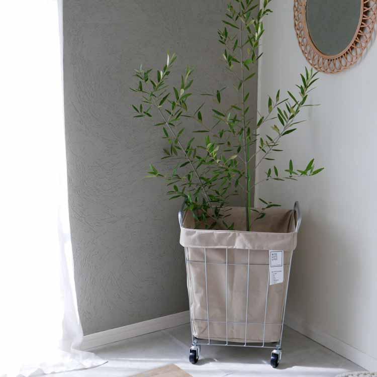 ランドリーストレージスクエア45L 観葉植物