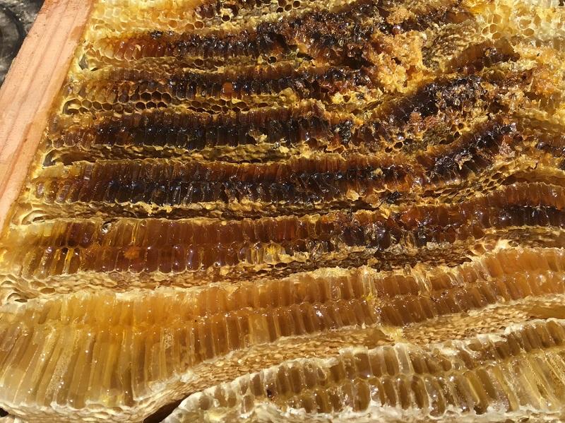 日本みつばち 蜂蜜2個セット
