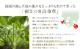有機JAS 長命草茶(健康茶) 送料無料 国産  有機JAS オーガニック ヘルシー