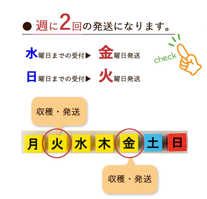 生桑葉 ペット・蚕のエサ 1kg