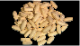NHK DVD教材 栄養の科学 〜五大栄養素を科学する〜