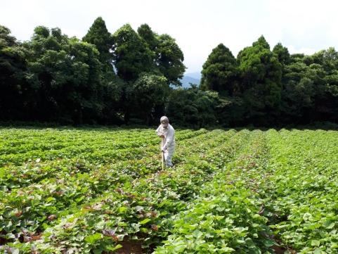 長崎・五島「芋蔵林」冷凍焼いも4種詰合せ