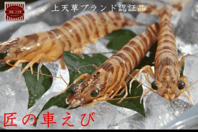 【 九州探検隊×九旬直送便 】熊本・上天草 匠の大きな車えび(冷凍)