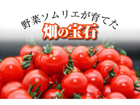 熊本「畑の宝石」ソムリエトマト2種