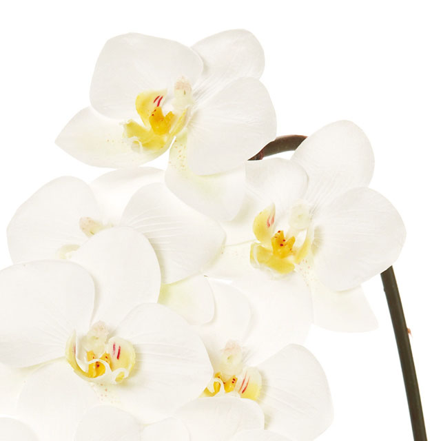 ローランドファレノプシス ホワイト(東京堂/FW093444-001, FW93444)【アーティフィシャルフラワー(高級造花)】