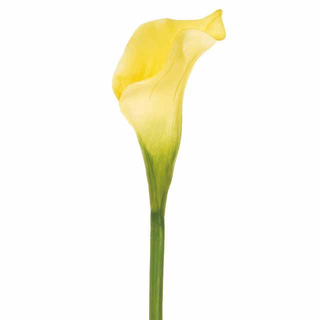 ヴィンセントカラー M イエロー(東京堂/FW099052-004, FW99052)【アーティフィシャルフラワー(高級造花)】
