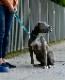 sleepypod Traffic Leash トラフィックリーシュ (全4カラー/1サイズ) 大型犬向けのショートリード