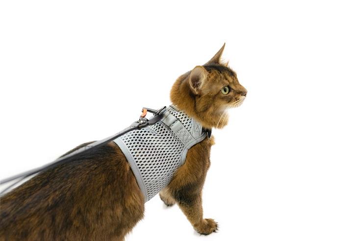 sleepypod Martingale Cat Harness マーチンゲールキャットハーネス (全5カラー/3サイズ)