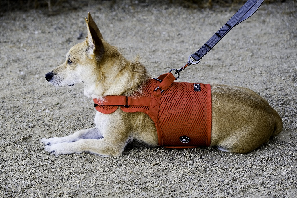 sleepypod Martingale Dog Harness マーチンゲールドッグハーネス (全5カラー/3サイズ)