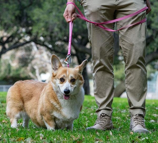 sleepypod Power Leash パワーリーシュ (全4カラー/2サイズ) 小型犬から大型犬まで幅広い犬種で使用できるリード