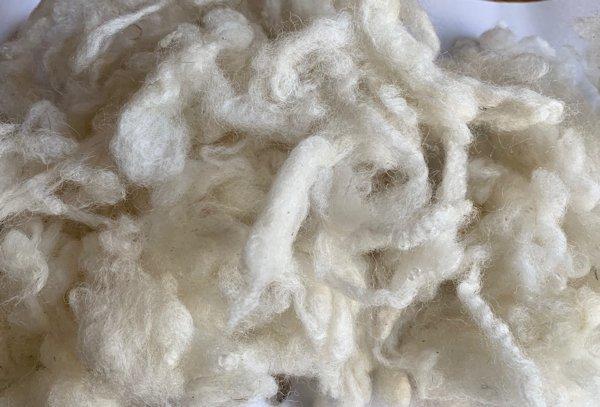 クロスブレッド白(洗毛済み)100g <紡毛 紡ぎ 染め 羊毛 フェルト>