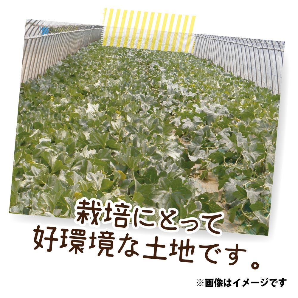 千葉産 飯岡メロン(タカミ) 5L/2玉