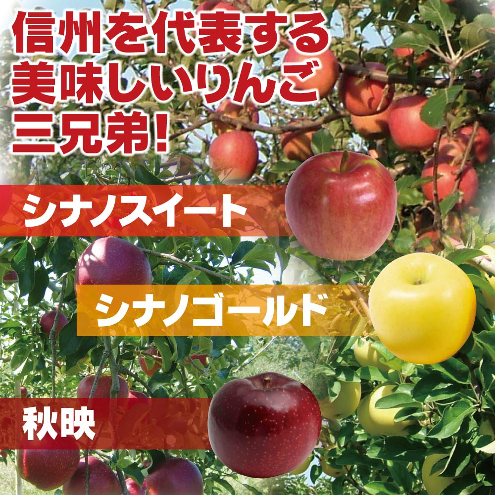 【10月上旬頃配送開始】長野県北信濃のりんご シナノスイートお徳用 約5kg/13〜20玉【予約販売】