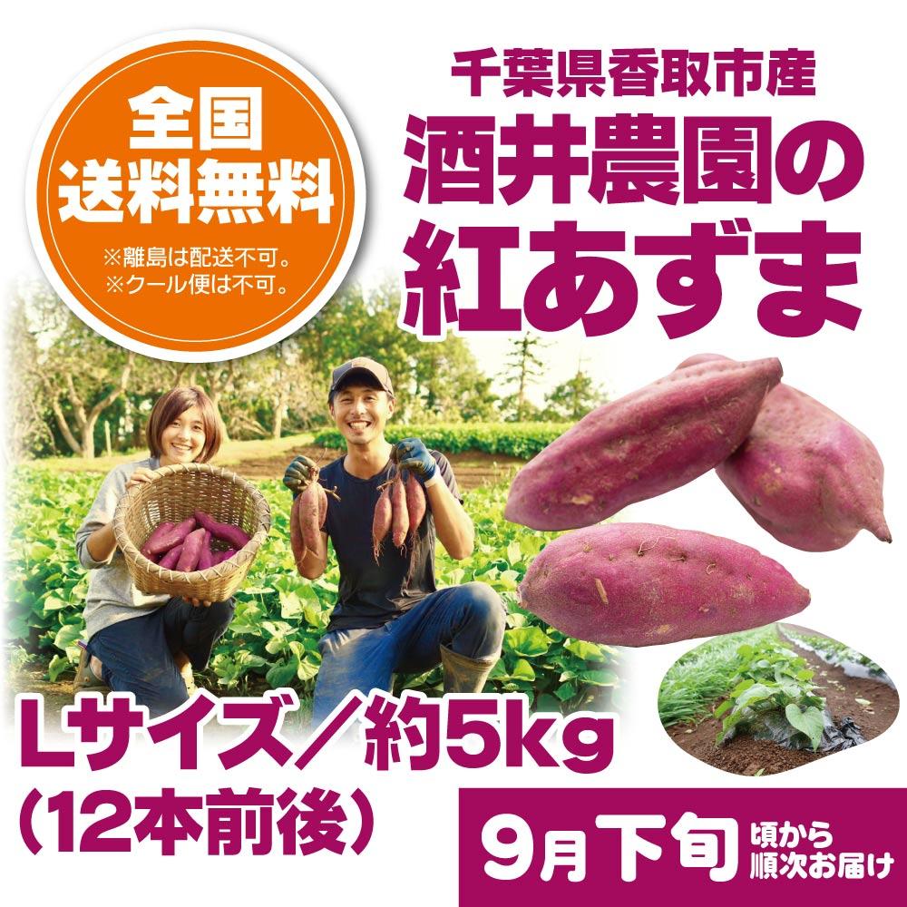 【9月下旬頃配送開始】千葉県香取市 酒井農園のさつまいも 酒井農園の紅あずま Lサイズ/約5kg(12本前後)【予約販売】
