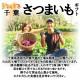 【9月下旬頃配送開始】千葉県香取市 酒井農園のさつまいも 酒井農園の紅あずま 訳アリ 約5kg ※サイズ・本数指定不可、規格外品数量限定 なくなり次第終了【予約販売】
