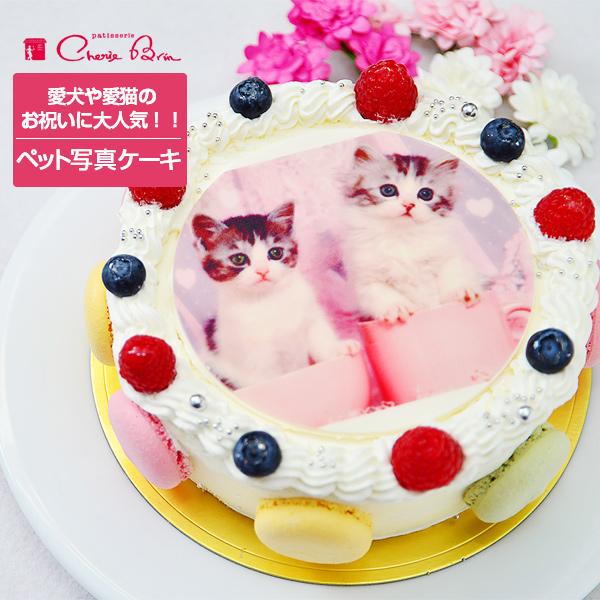 《ペット用》マカロン 写真ケーキ 4号〜10号