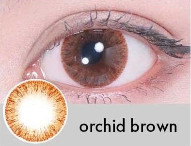 【度あり・度なし】Orchidブラウン(1年)