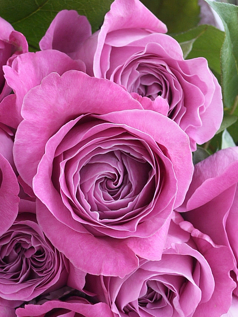 Dozen Rose -ダズンローズ- ロゼ