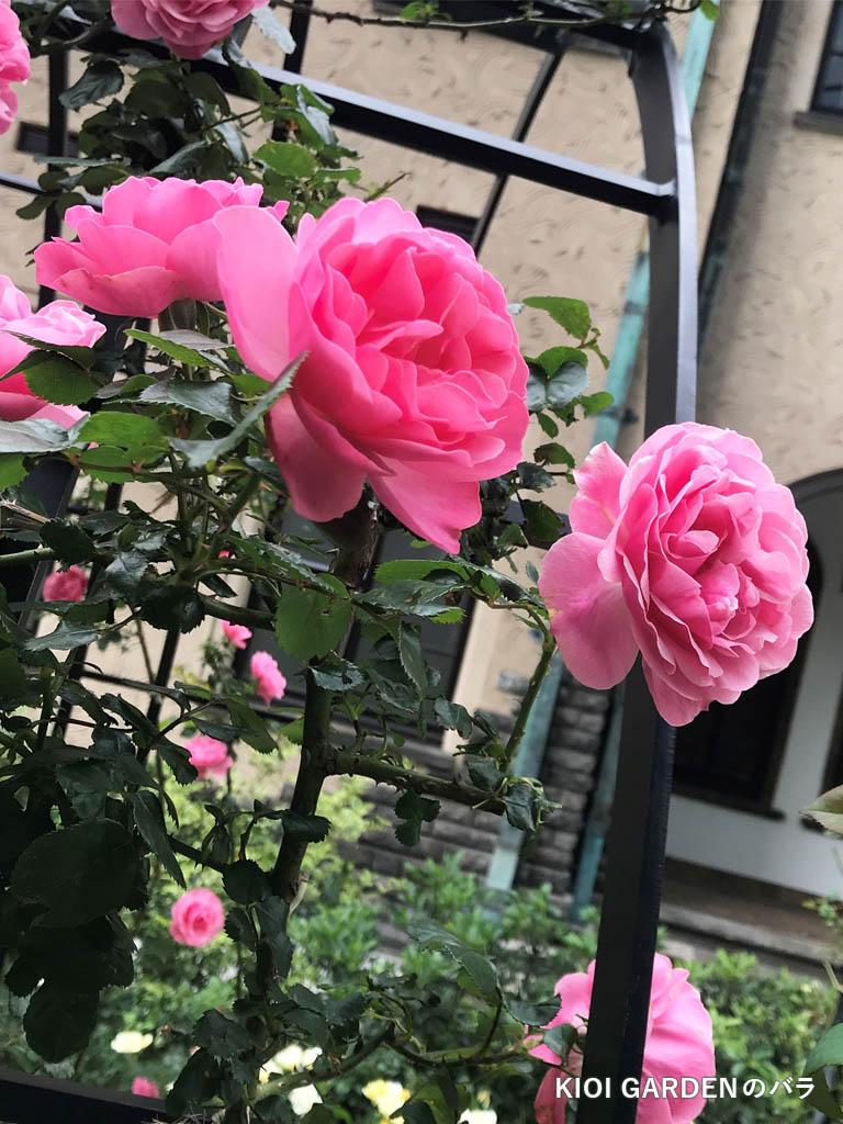 【紀尾井町店オリジナル商品】KIOI GARDEN ROSE Square Wreath 数量限定