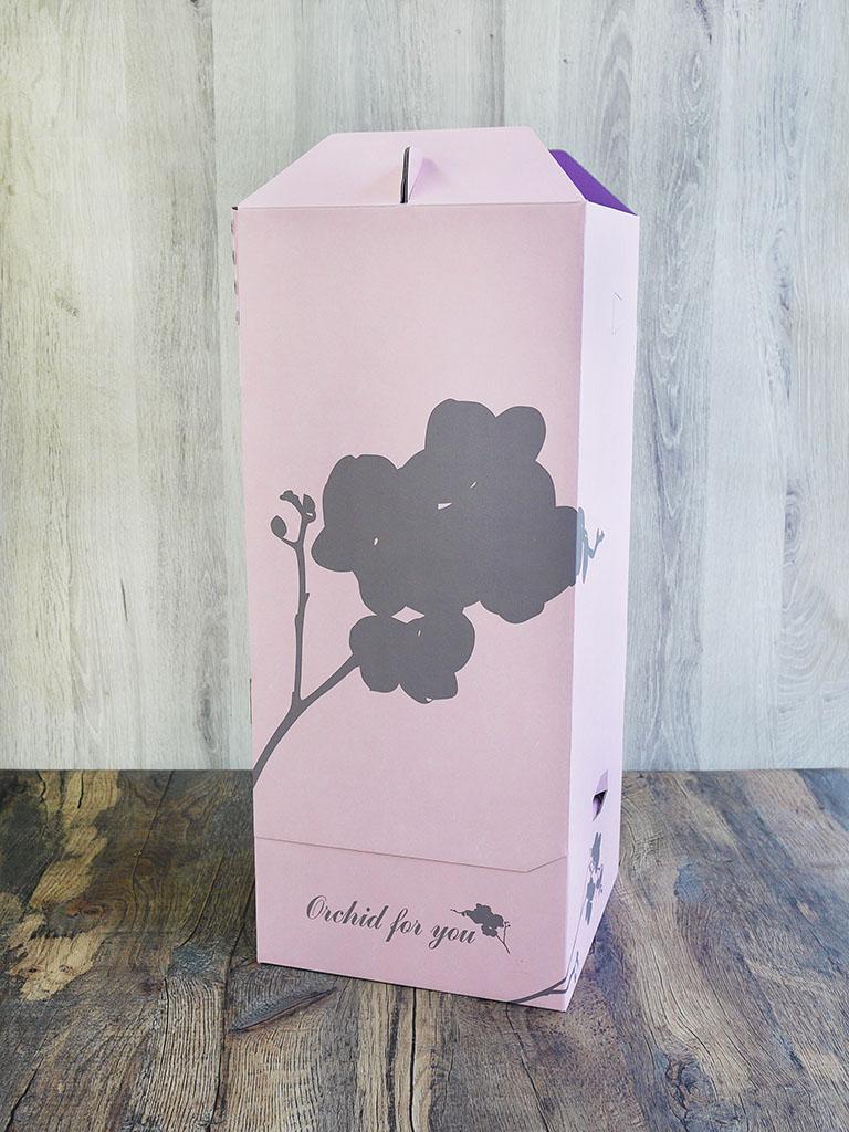 【産地直送】椎名洋ラン園 ミディ胡蝶蘭4号鉢2本立ち|濃いピンク系