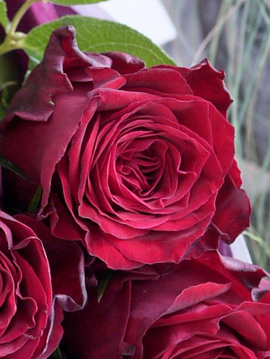 Dozen Rose -ダズンローズ-|ルージュ