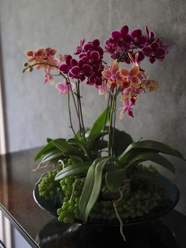 瑞雲 zuiun ミディファレノに季節の実物や小物を添えて[寄せ植え] #002