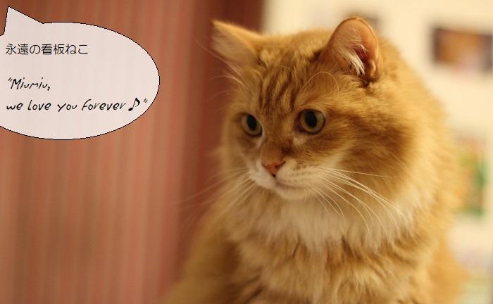 【送料無料】サイクルジャージ『シャトン』ネコ好きのためのサイクルジャージ サイズ交換可