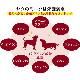 ヒマラヤチーズ べイクド ポップ  トッピング【代金引換専用】