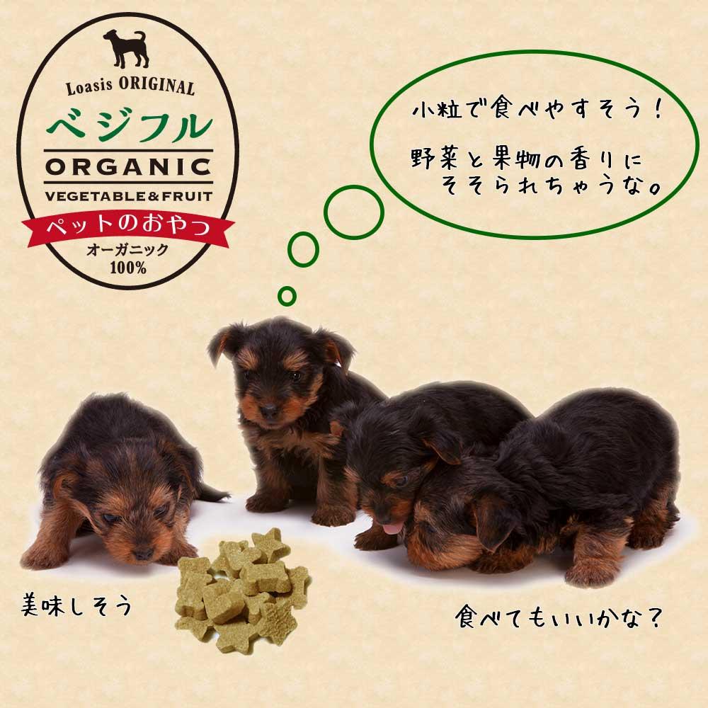 愛犬用クッキー【ベジフル:ミニパック】 ※米国USDAオーガニック認定取得だから安心&安全! (賞味期限:2022年3月)