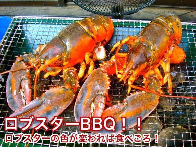 天然カナダ・アメリカ東海岸産 活ロブスターL(オマール海老[エビ]) 450g [×2尾]