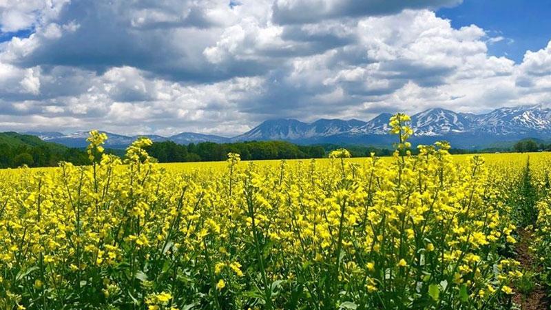 魅力豊かな美瑛から畑の恵みを。【丘のおかし】焼とうきび・とうきび20袋【送料無料】