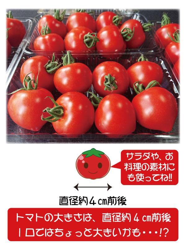 トマト ミニトマト 超新鮮 農園直送 フルーツトマト 即日発送 和歌山 中居農園 1kg (250g×4パック) 6月上旬〜7月中旬迄販売