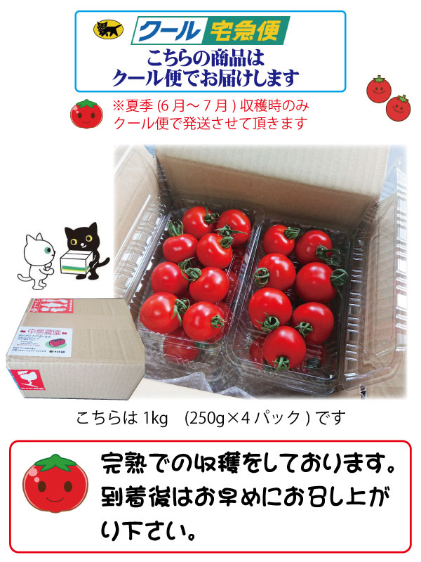 トマト ミニトマト 超新鮮 農園直送 フルーツトマト 即日発送 和歌山 中居農園 2kg (250g×8パック) 6月上旬〜7月中旬迄販売