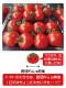 トマト ミニトマト 超新鮮 農園直送 完熟 フルーツトマト 即日発送 和歌山 中居農園 3kg (250g×12パック) 6月上旬〜7月中旬迄販売