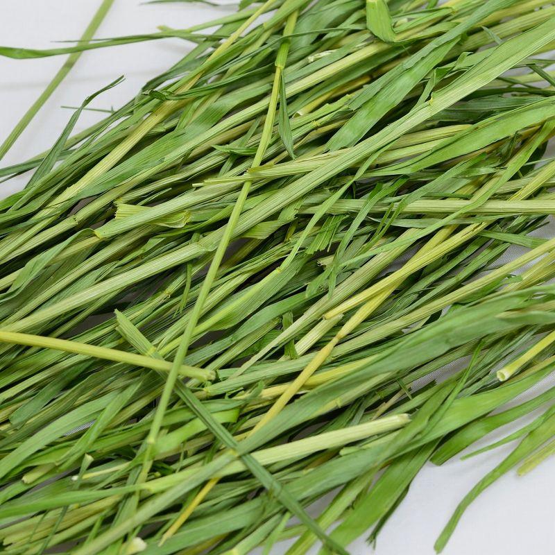 2020高原の朝採り牧草「麦」ヤング 450g ※2020年7月29日発売 ※1週間あたりお一人様4個まで