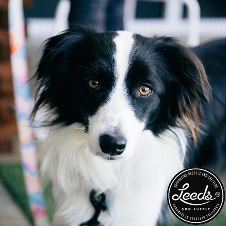 【送料無料】Leeds Dog Supply リーズドッグサプライ POOL PARTY STEP IN HARNESS ドッグハーネス Sサイズ