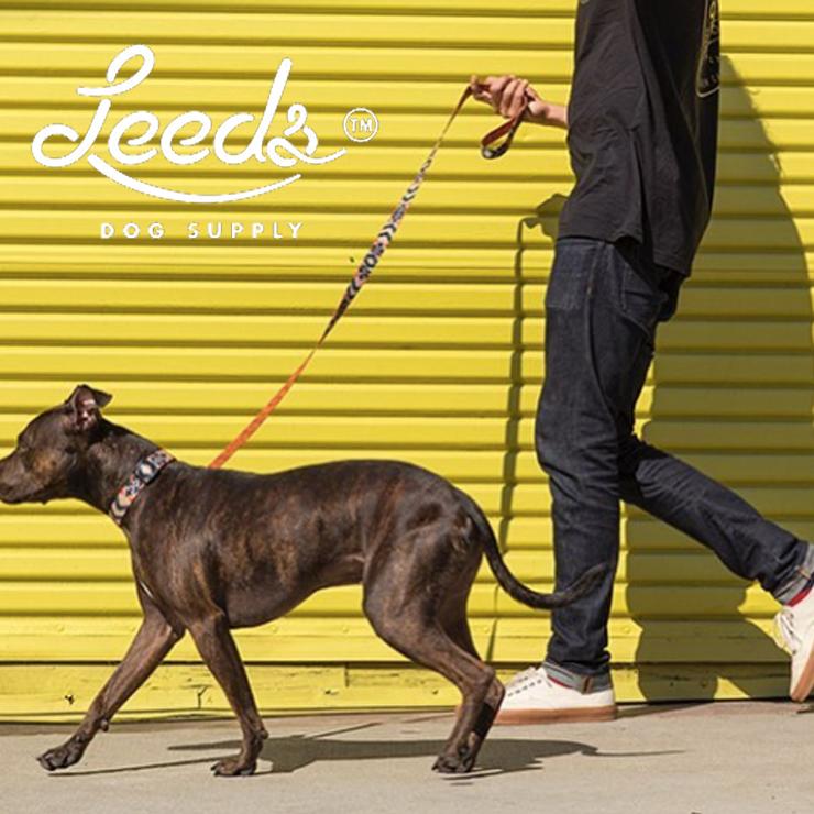 [クリックポスト対応] Leeds Dog Supply リーズドッグサプライ COLLOR 首輪 FORTUNATE ISLANDS Mサイズ