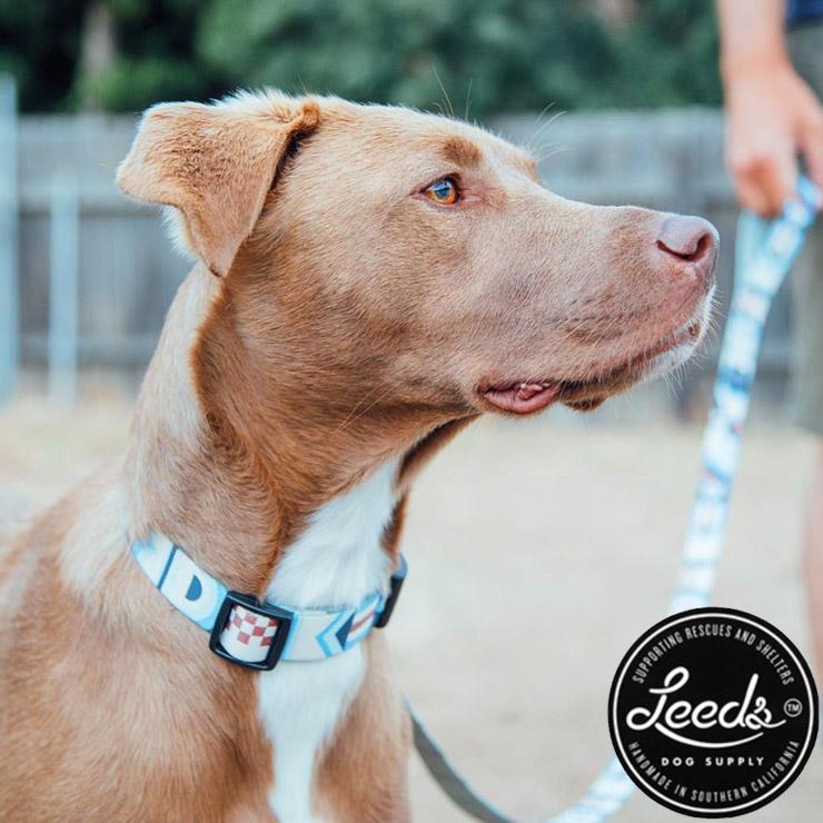 [クリックポスト対応] Leeds Dog Supply リーズドッグサプライ COLLOR 首輪 CATALINA Mサイズ
